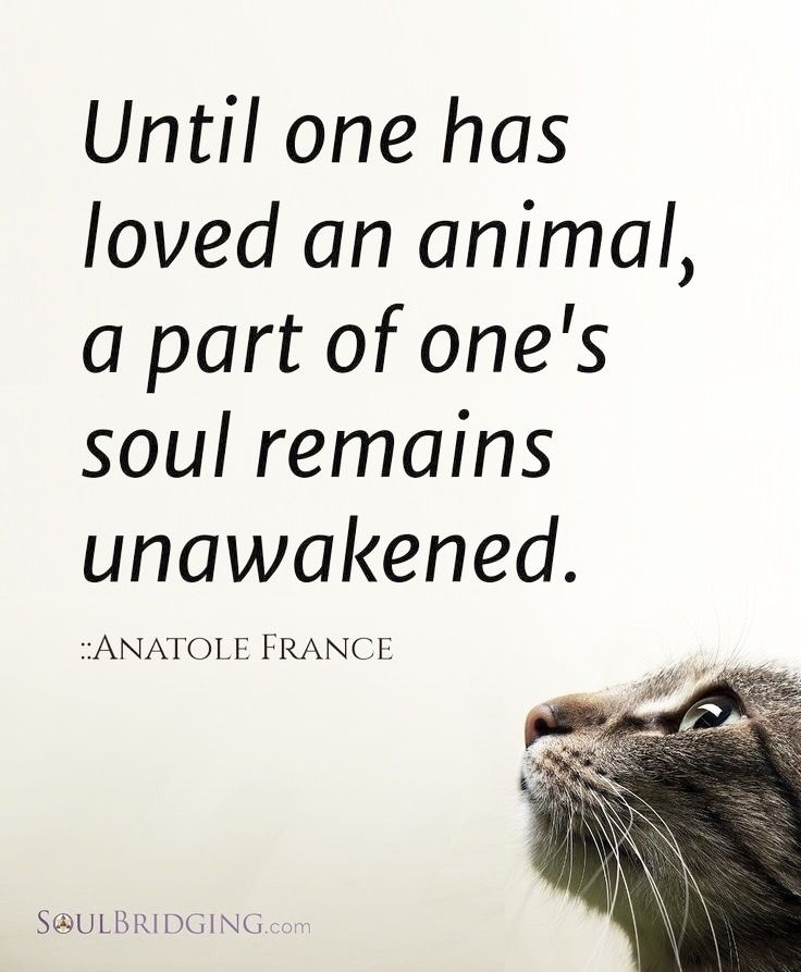 Best 25 Welfare Quotes Ideas On Pinterest Animal Rights