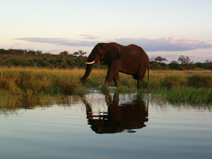 Bootrit op die Chobe rivier; waar 4 lande bymekaar kom- Zambië, Botswana, Zimbabwe, Namibië