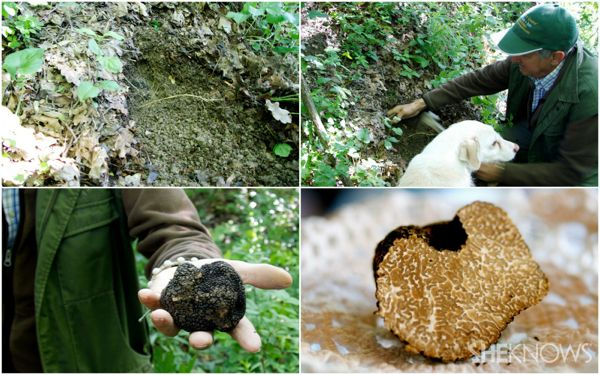 I would love to go truffle hunting in Italy.
