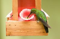 What is the proper nectar recipe for hummingbird feeders? -