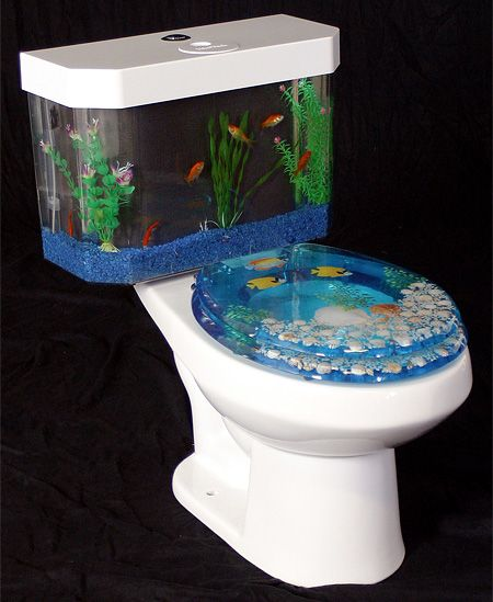 Because everyone needs an audience when taking a crap for Buy fish tank