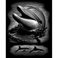 Reeves Scraperfoil - Silver - Dolphin Portrait