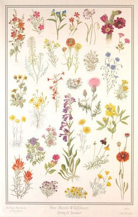 New Mexico Wildflowers-Spring & Summer.... a wildflower tattoo....