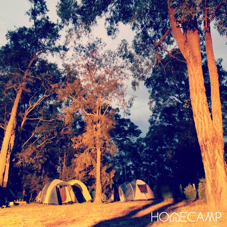 What a strange light and scary shadows !! Keep calm, you're on a private property :) #camping #sleepunderthestars #democratisecamping #airbnb #tent #homecamp #homecamp_aus