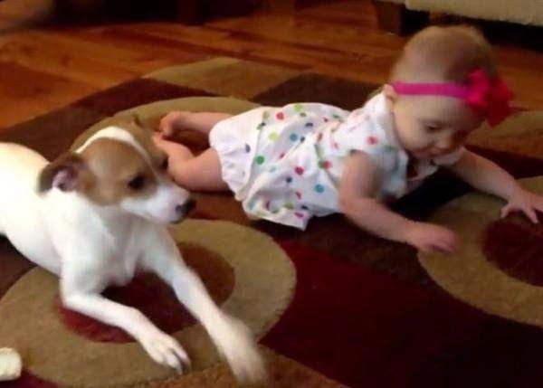 Enternecedor video en el que un perro enseña a gatear a una bebé