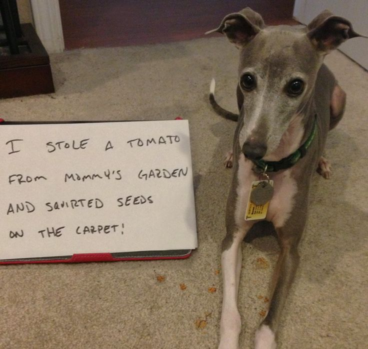 Dog Ate Some Rug: 102 Best Pet Confessions Images On Pinterest