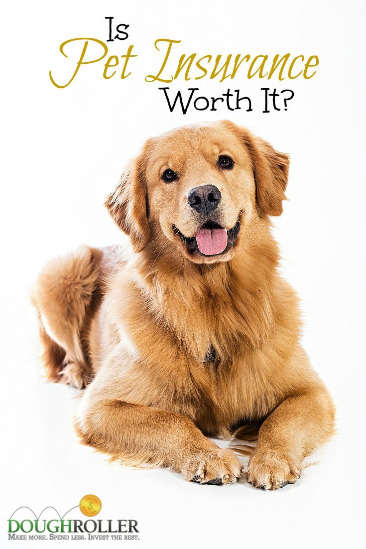 Sure you love your pet, but is pet insurance worth the cost? We take a look at the costs and benefits inside.