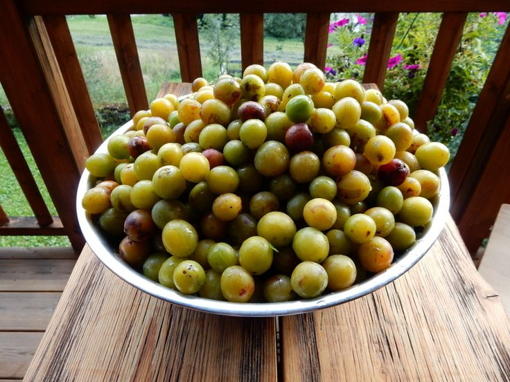 The fruit from the mirabelle plums trees in the garden of Chalet Cannelle