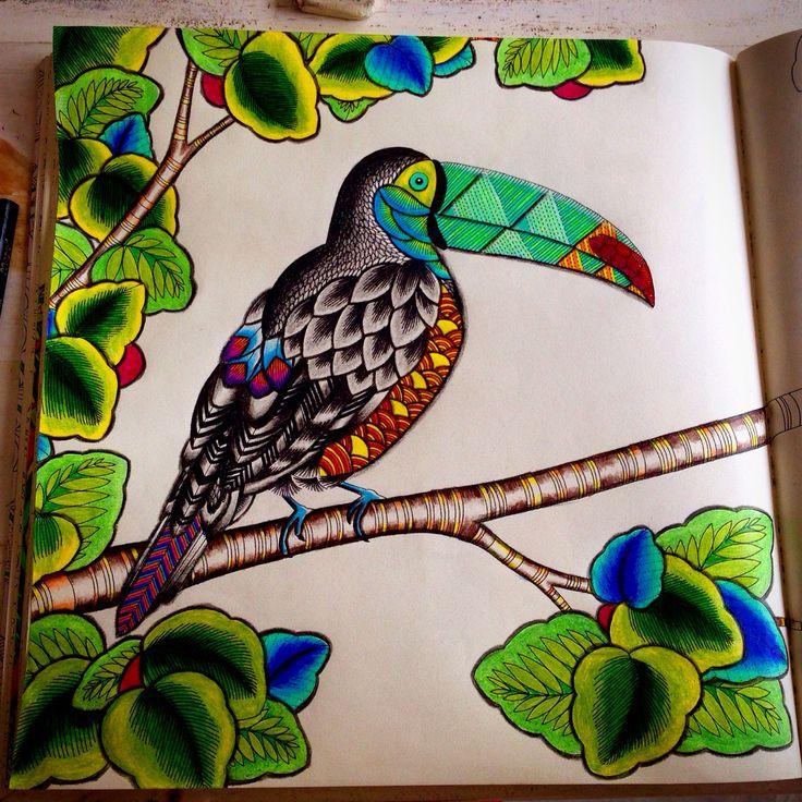 Tucano Reino Animal Adult ColoringColoring BooksAnimal KingdomColouring
