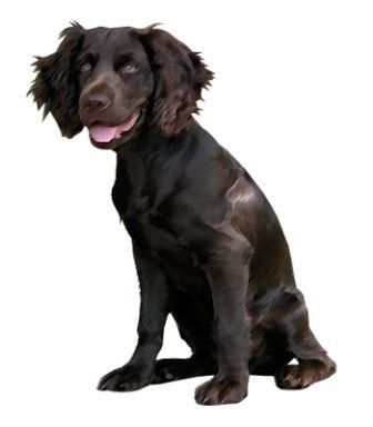 16 best dog breeds images on Pinterest | Pet health, Dog breeds ...