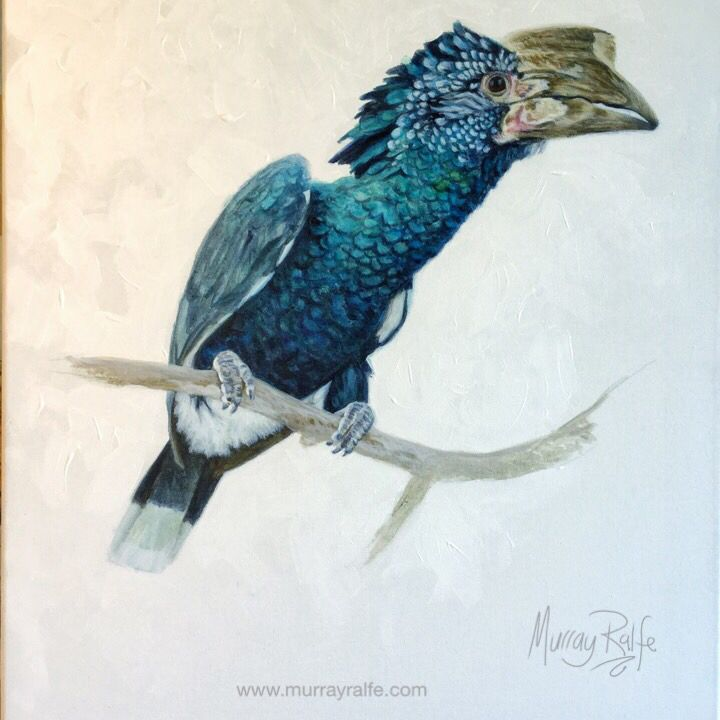 Silvery-cheeked hornbill (Bycanistes brevis) painting, acrylic on canvas. Preparatory painting to get to know the bird for a large 2.5m x 2.5m commissioned painting