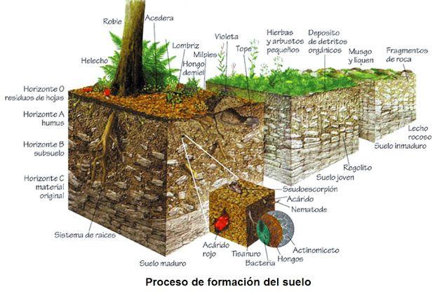 Edafolog a proceso de formaci n del suelo edafologia - Como solar un suelo ...