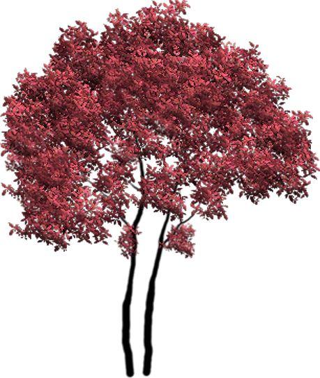 tubes arbres arbustes feuillages ps gereedskap. Black Bedroom Furniture Sets. Home Design Ideas