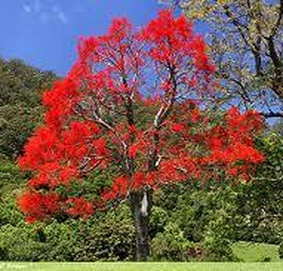 Dynamis Essence: 50ml Australian Bush Flower Essence