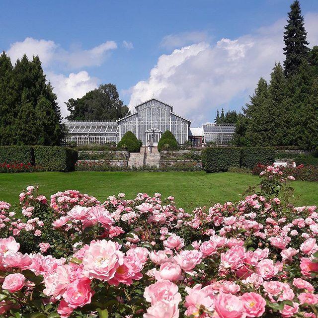 #summer #summerday #finnishsummer #roses #finnismoments#sky #clouds #finland #kesäpäivä #suomenkesä #ruusut #talvipuutarha #helsinki