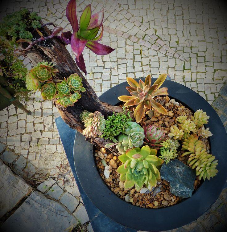 www.pedras-e-suculentas.com