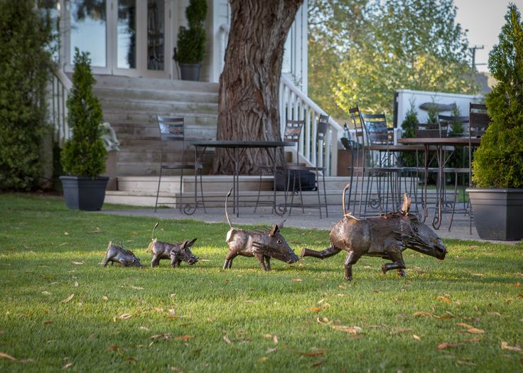 Birdwoods Warthog family on the run across the lawn at Birdwoods Gallery