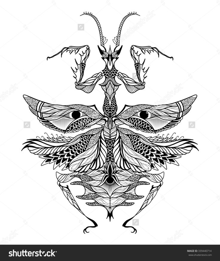 16 best Preying Mantis Stencils & Drawings... images on