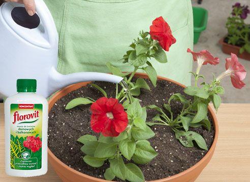 Если петуния плохо растет - подкормите ее удобрениями