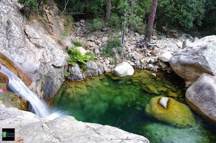 Corsica - Fleuves et Rivieres Corse - La Purcaraccia est un ruisseau de la commune de Quenza, sur le massif de Bavella et du bassin de Sari-Solenzara en Corse-du-Sud, et un affluent du fleuve côtier la Solenzara.La longueur de son cours est de 5,6 km.La source de ce ruisseau au sud-est de la Punta di u Fornellu (1 899 m), à l'altitude 1 707 m. La confluence a lieu après des cascades, près des aiguilles d'Urnucciu, avec le ruisseau de la Vacca, le nom de la Solenzara dans les hauteurs.