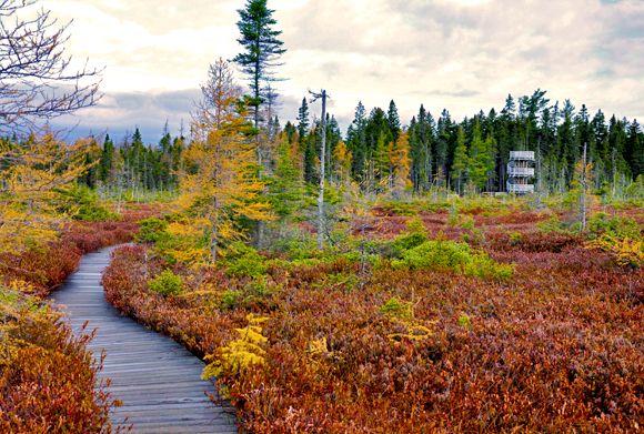 Parks Canada - Activities - Nature Trails Kouchibouguac National Park