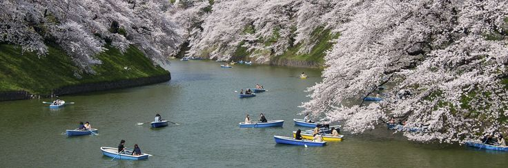 Chidorigafuchi in the spring Pinterest users can get 20% off the ebook with this code: PINT20