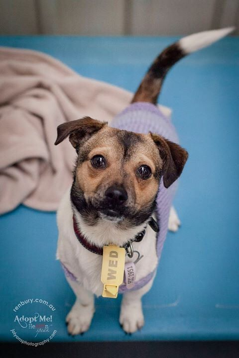 It made my day today to see a little dog who last week was very scared and subdued, and today was a changed dog. His little timid mate got adopted this week and has gone to their new home. Since that dog left, this little guy has gained confidence and is