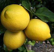 Lemon Jam recipe (This recipe has its origins in an old CWA cookbook).