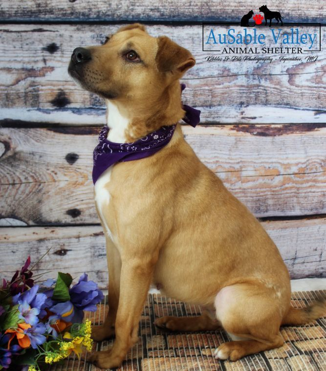 Pet Adoption Inquiry Success Petfinder Pet Adoption Adoption