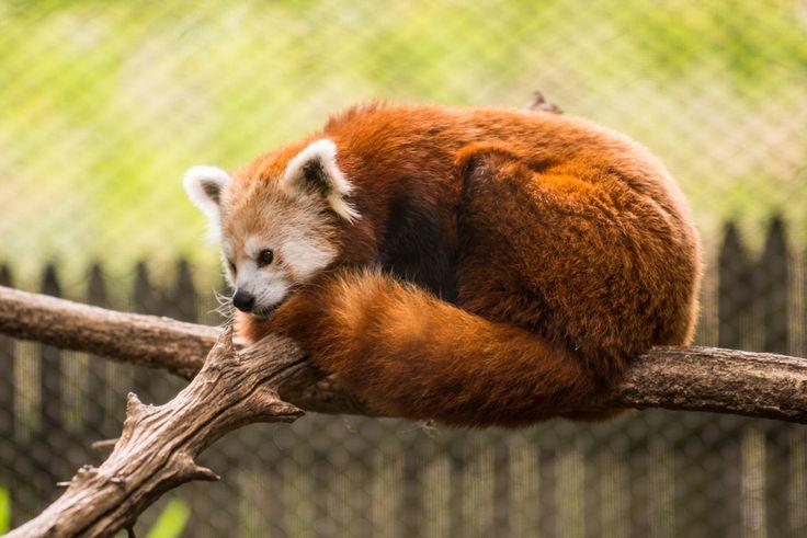 Erie Zoo   Western Pennsylvania travel ideas   Pinterest