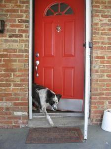1000 Images About Fabulous Front Door Colors On Pinterest