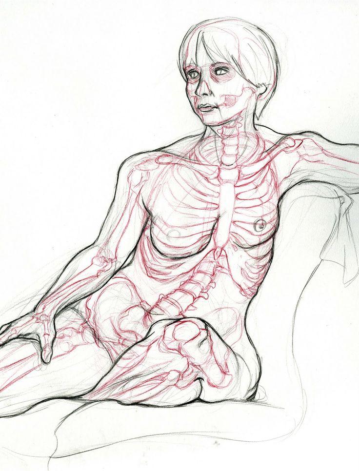 http://imgarcade.com/1/rabbit-muscle-anatomy/