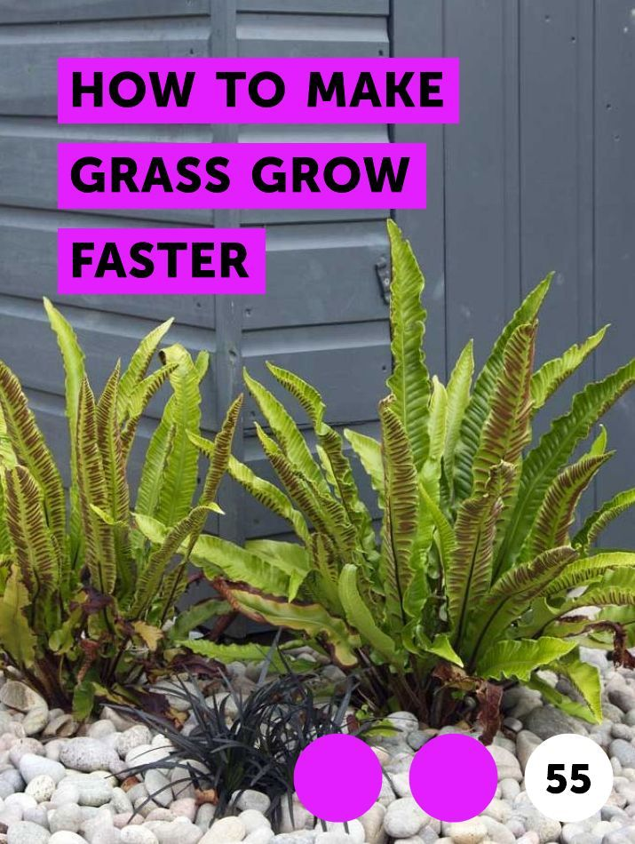 Learn How To Make Grass Grow Faster How To Guides Tips And Tricks Plants Bamboo Plants Harvesting Poppy Seeds