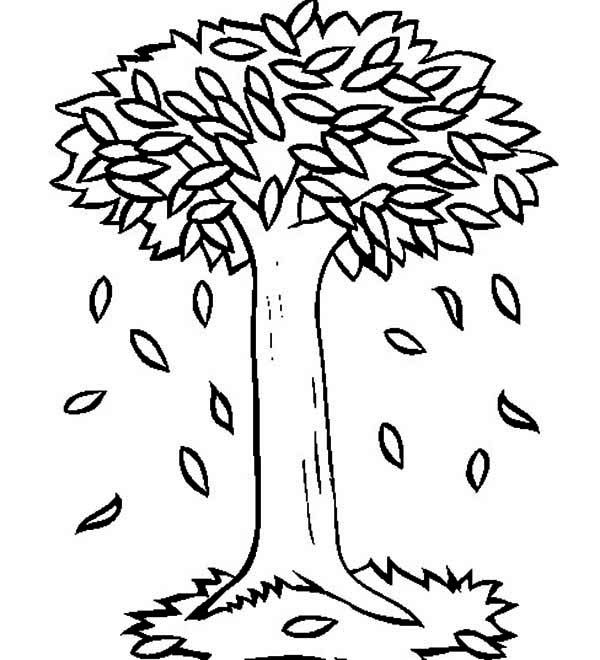 Autumn Big Trees In Autumn With Autumn Leaf Coloring Page Sight Word Writing Tree Coloring Page Leaf Coloring Page Fall Coloring Pages