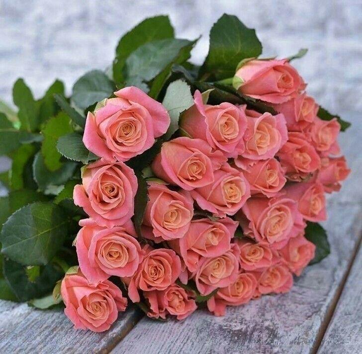 Солнышка тебе, коралловые розы открытки