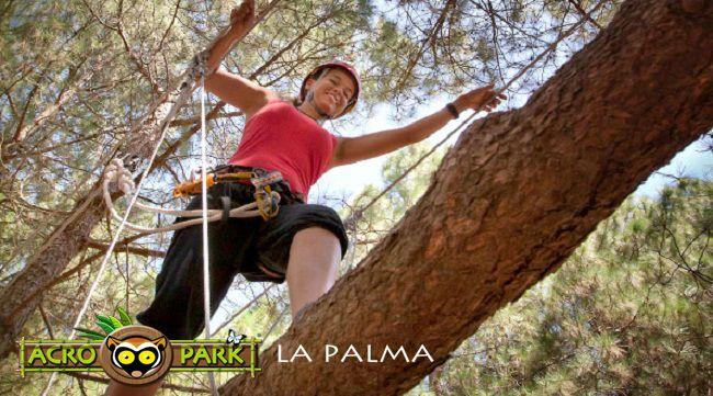 Acropark  Un parque de aventura entre árboles.Puentes tibetanos, escaleras, tirolinas, redes…Los árboles componen circuítos con diferentes grados de dificultad