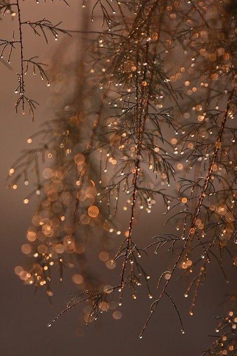 Festive shimmer