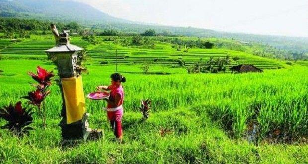 Balinese Goddess of Rice and Prosperity #baliaround