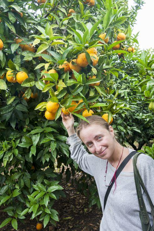 Picking Lemons and Oranges in Gargano, Puglia - Southern Italy!