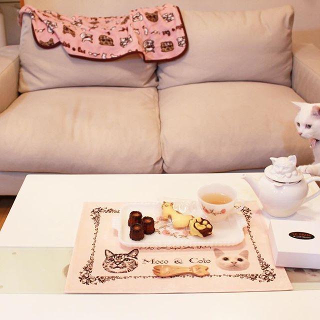 maihimemoco こっちゃんが淹れてくれた紅茶は美味しいわ☕️ * *  今日のおやつは @tanpopobento ちゃんの手作り猫クッキー&ケーキロブションのカヌレ❤︎ それをモココトランチョンマットで * * クッションの柄のランチョンマットとコースターを @chocokumaron さんにお願いして、また作ってもらっちゃいましたあー、可愛い。 3/17からの #ねこ休み展 から少量ですが販売もすることにしました♪よかったら、とても丈夫な生地で縫製も丁寧なので特別な猫会などのときに使っていただけたら嬉しいです♪ * * 『早くかつおを並べてほしいの、あたち』 * * #モココトカフェ #モココトグッズ #毎度ピンクですみません #後ろのブランケットは風ちゃん用 #ファイヤーキング  #ごちそうさまでした  2017/03/05 13:21:05