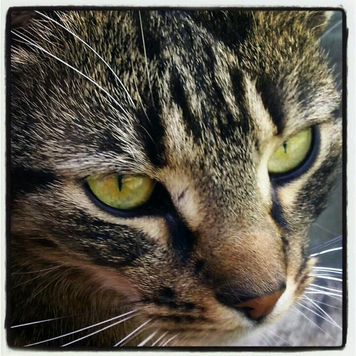 My boyfriend's tiger ;-) a little bit 'instagramed'