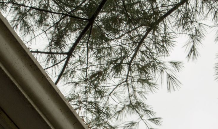 """Being on a ladder digging pine needles out of a gutter brings forth focus and the joy of being in a state of flow. Why then do I avoid this chore?  Read my story of a busy mind and the joys of focused intent in my blog post, """"A Tale of Avoiding"""", to find out."""