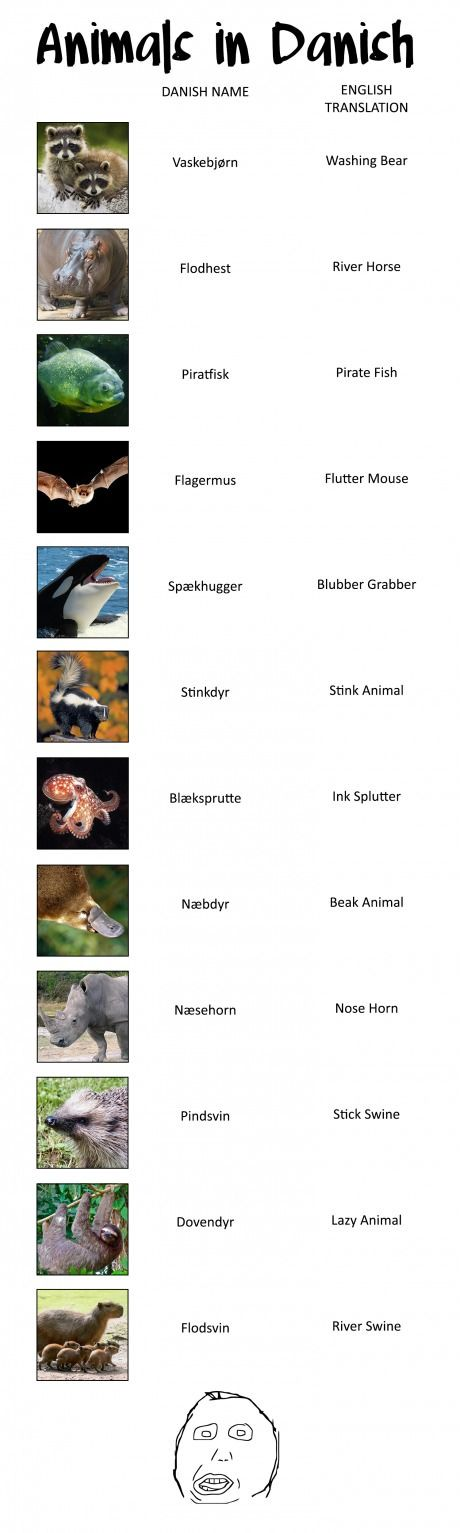 Dutch is not the only language with stupid animal names...