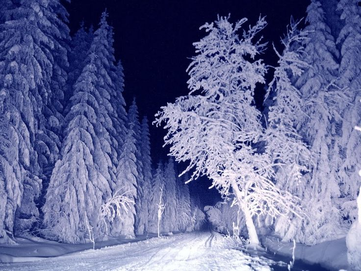 https://i.pinimg.com/736x/95/bd/00/95bd00aad632f57e5a6409d80183dd0e--happy-new-year-winter-night.jpg