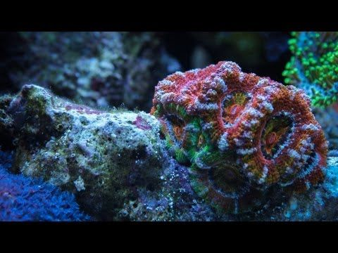New time lapse video of a reef awakening shows the beauty of the early morning reef