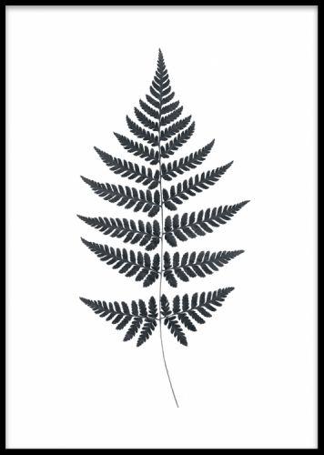 Fern, poster. Print med svartvit ormbunke på vit bakgrund. Stilrent motiv som gör sig väldigt bra i hemmet eller på arbetsplatsen. Fin och intressant som detalj i en tavelvägg tillsammans med andra tavlor och posters.