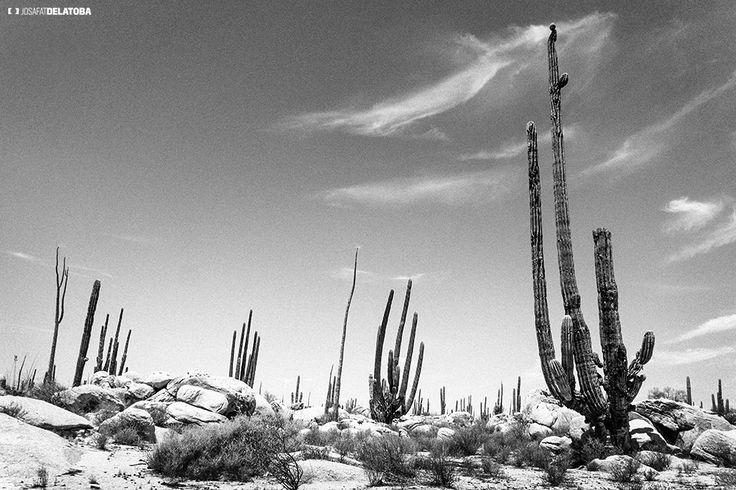 Desert of  La Baja  #josafatdelatoba # #mexico #bajacaliforniasur #loscabos #landscapephotography #cabophotographer #desert #dunes