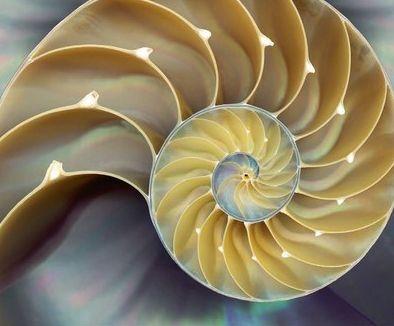 Nautilus shell, fibonacci spiral
