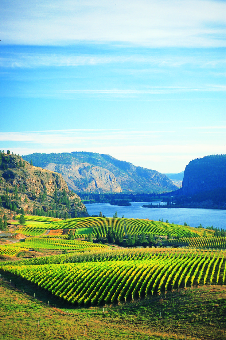 Washington is home to some of the most famous wineries, many of which have received top scores from notable critics.    This fall, the 22-passenger Safari Quest will host an 8 day exclusive series of wine and culinary sailings through Washington's stunning Columbia and Snake Rivers valleys.     Join us in raising a glass!