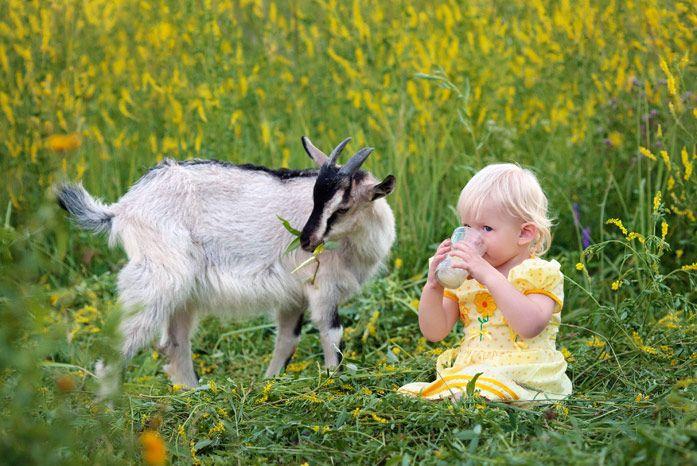 малышка с козьим молочком и козочка на полянке